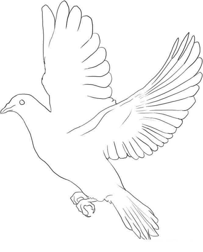 Раскраска Контуры для вырезания птиц Скачать .  Распечатать