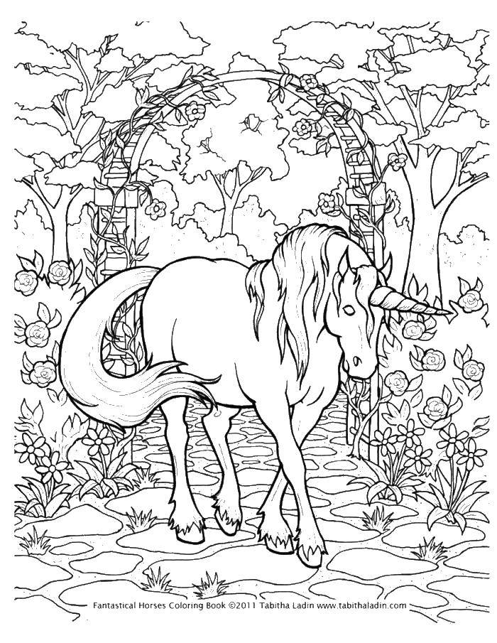 Раскраска Единорог и арка из цветов Скачать единорог, арка, цветы, деревья.  Распечатать ,единороги,
