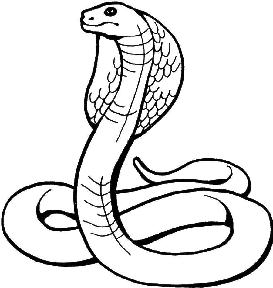 Раскраска змея Скачать ,101, далматинцы,.  Распечатать