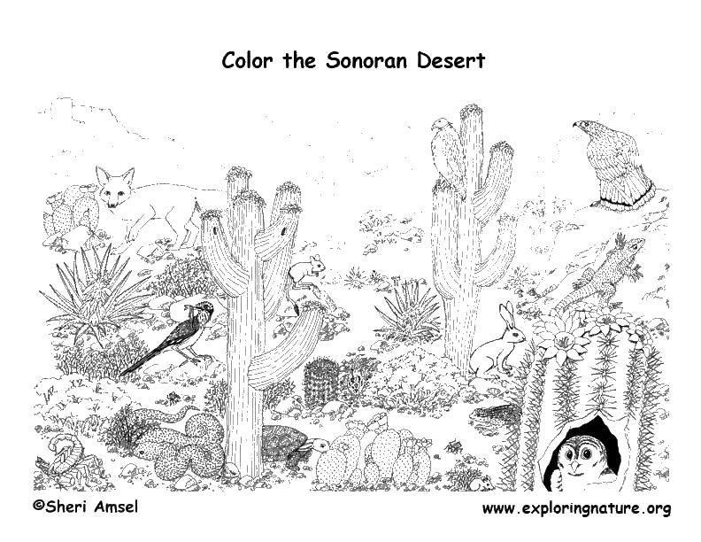 Раскраска Мир пустыни Скачать кактус, лиса, сова, змея.  Распечатать ,Пустыня,