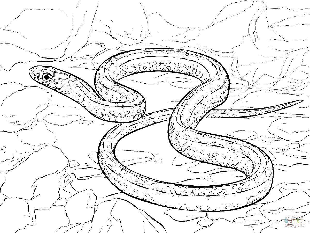 Раскраска змея Скачать ,рыбалка, борсук,.  Распечатать