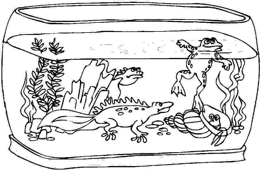 Раскраска Ящерицы, лягушка и улитка в аквариуме Скачать Аквариум, ящерицы, лягушка, улитка, вода.  Распечатать ,Животные,