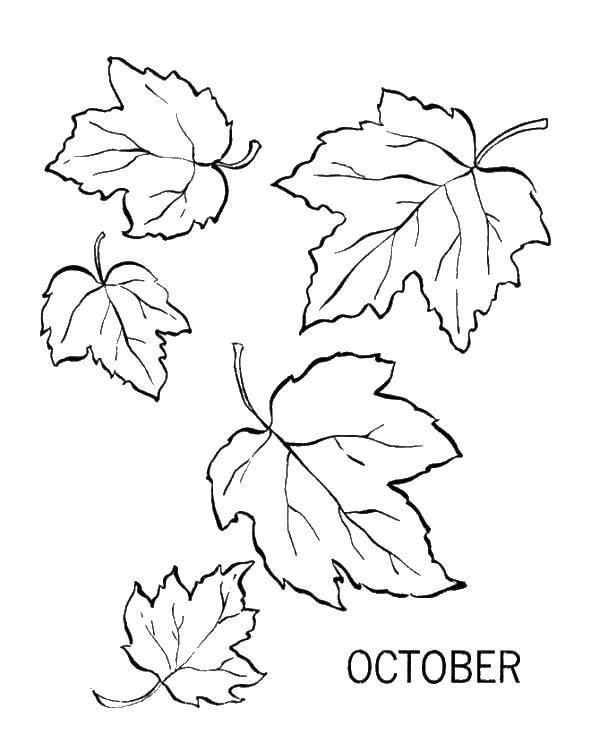 Раскраска Осенний листопад Скачать ,листия,октябрь,.  Распечатать