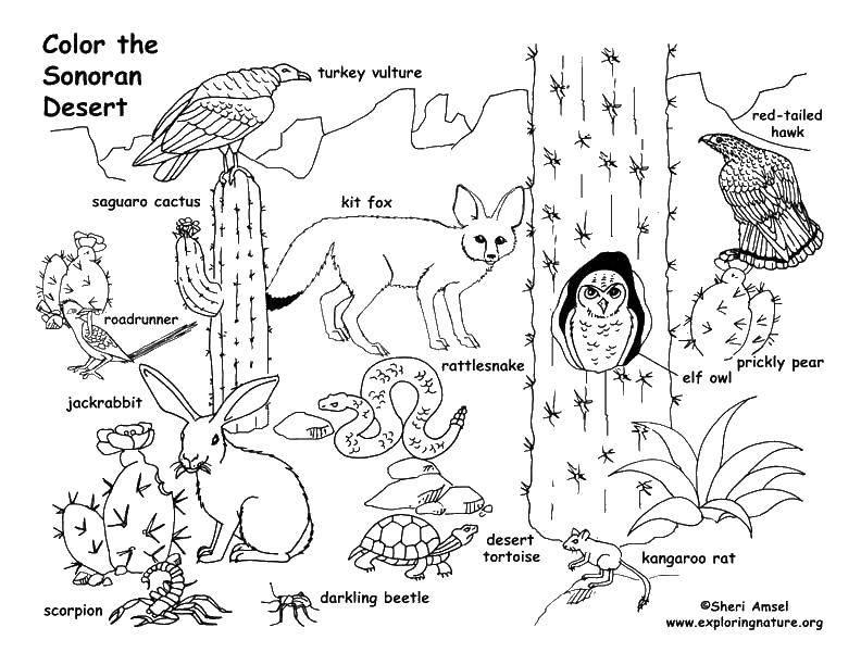 Раскраска Пустыня Скачать ,лиса, черепаха, скорпион, мышь,.  Распечатать