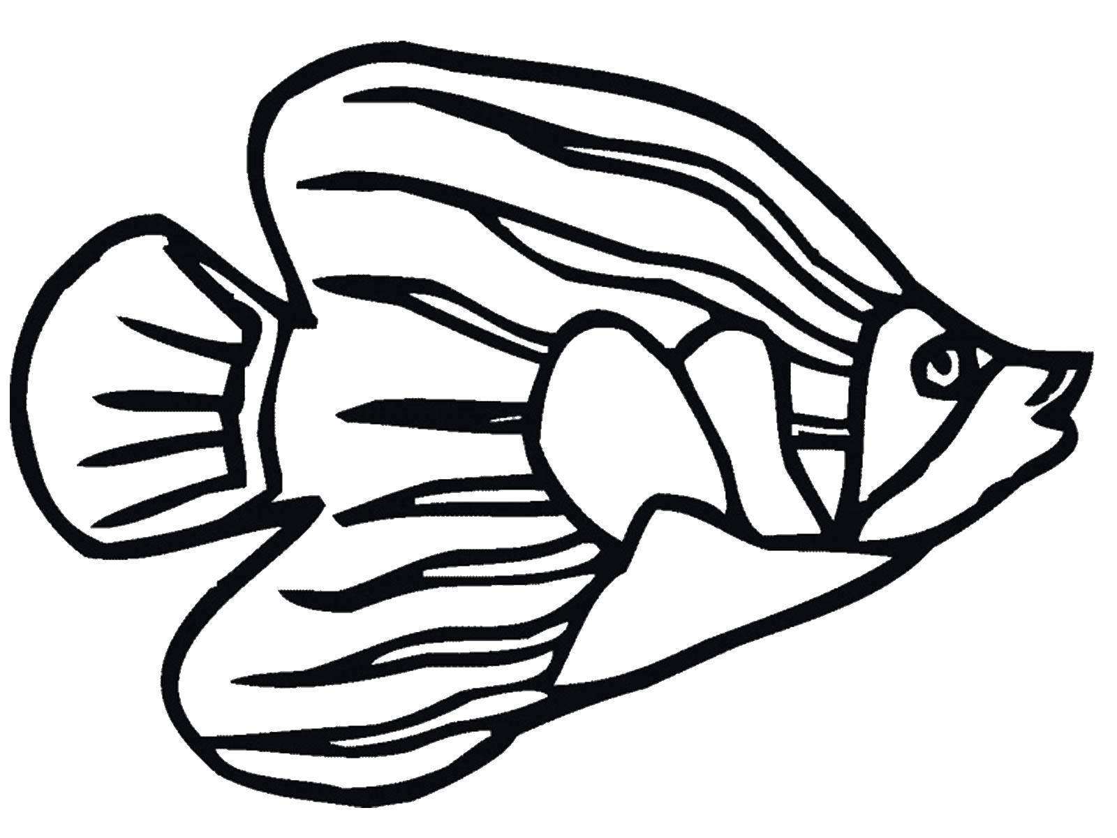 Раскраска Красивая рыбка Скачать морские жители, море, рыбы, вода.  Распечатать ,рыбы,