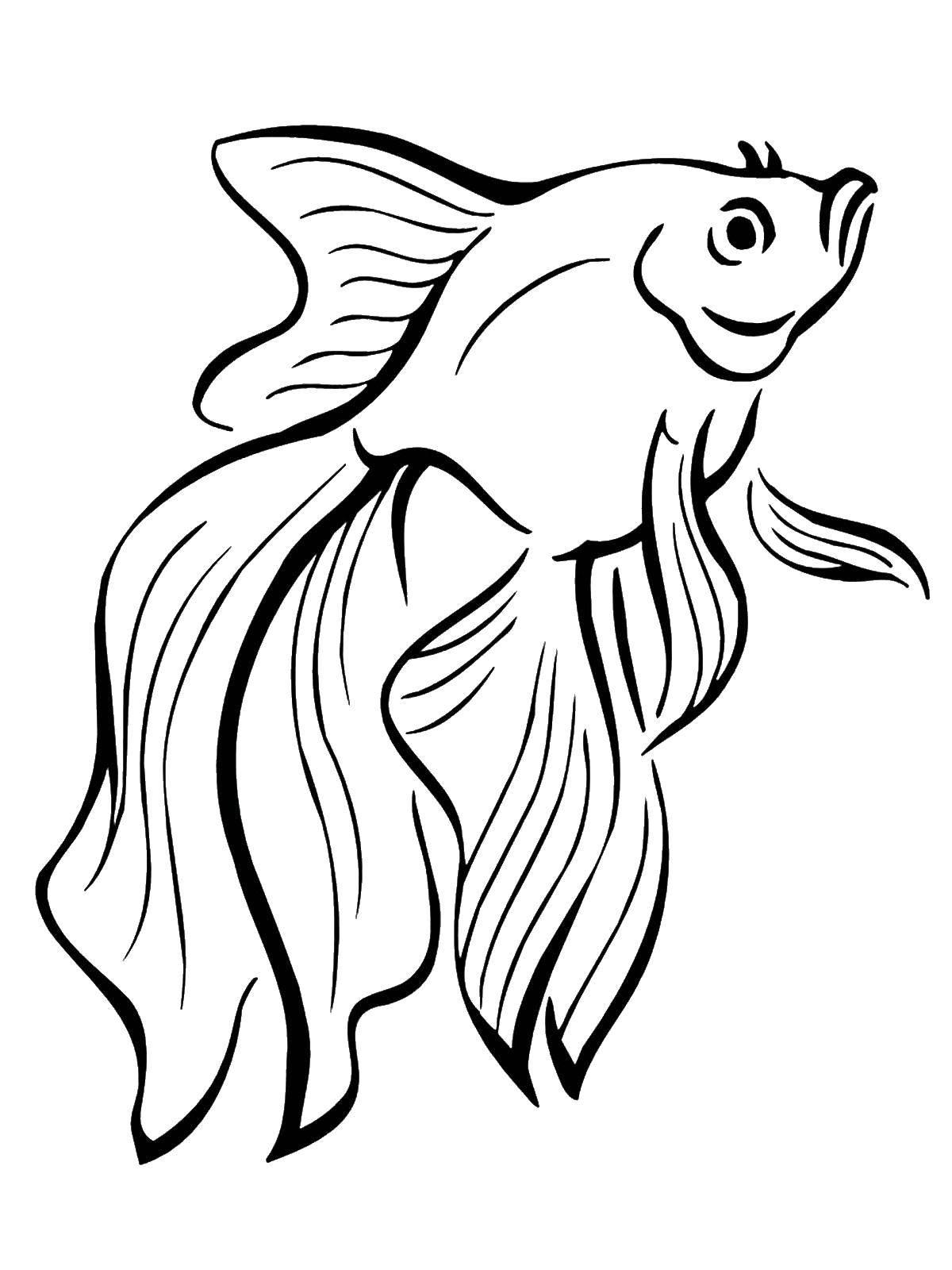 Раскраска Красивая золотая рыбка Скачать морские жители, море, рыбы, вода.  Распечатать ,рыбы,
