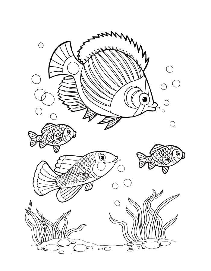 Раскраска рыбы Скачать .  Распечатать