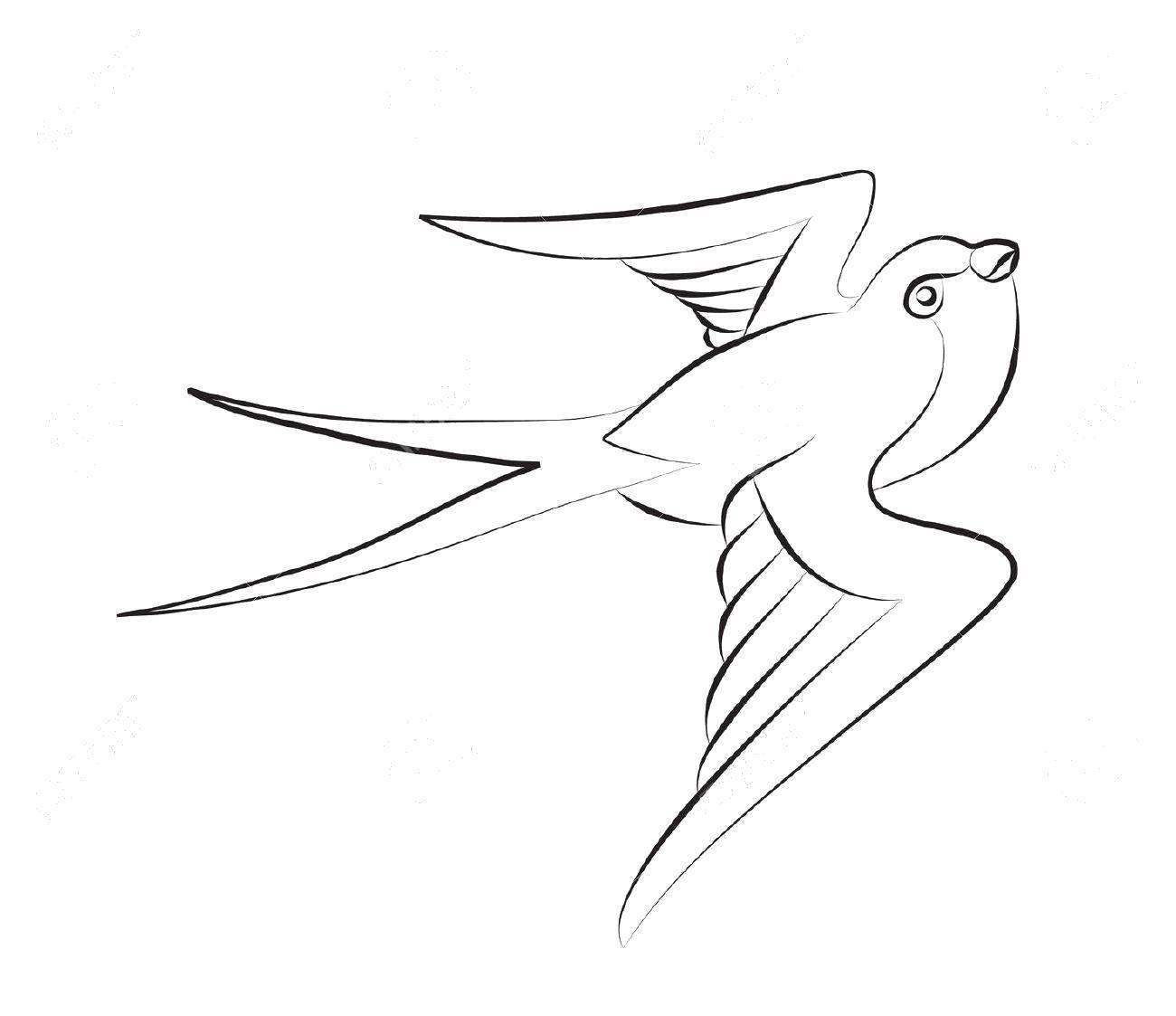 Раскраска Двойной хвостик ласточки Скачать Птицы, ласточка.  Распечатать ,птицы,