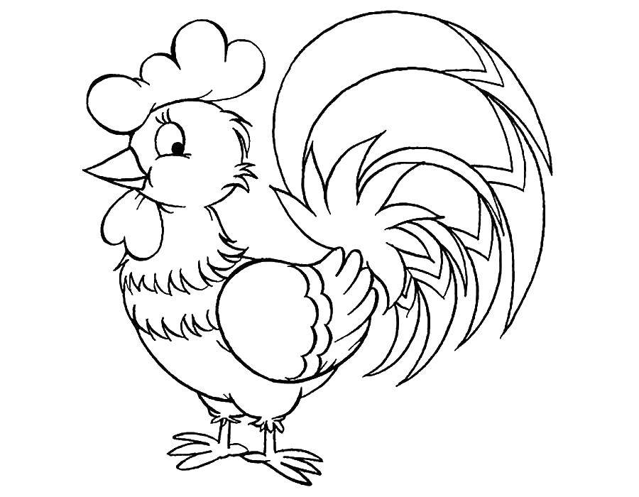 Раскраска Хвостик милого петушка Скачать Птицы, петушок.  Распечатать ,домашние животные,