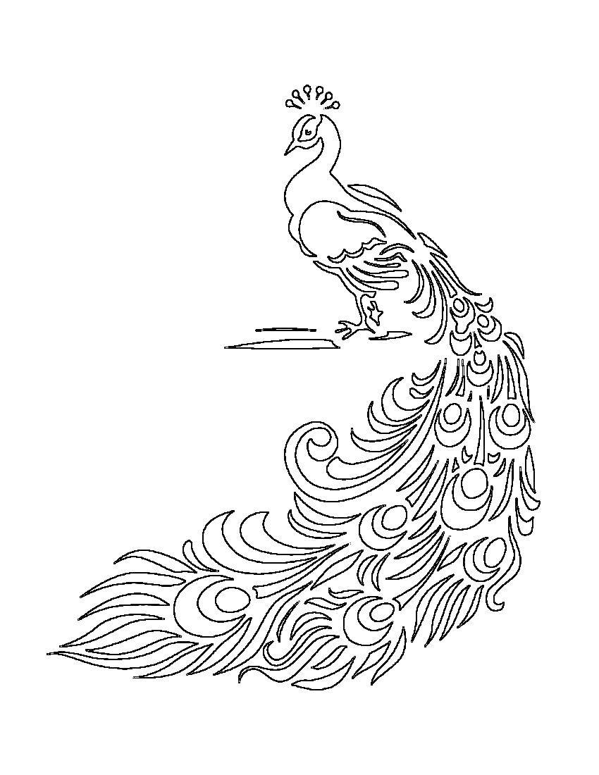 Раскраска Павлин с красивым хвостом. Скачать Павлин, птица.  Распечатать ,Контуры для вырезания птиц,
