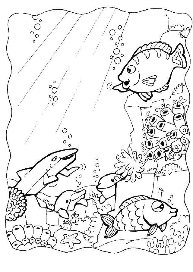 Раскраска Рыбки, акулы, дельфины в море Скачать морские жители, вода, море, рыбы.  Распечатать ,рыбы,