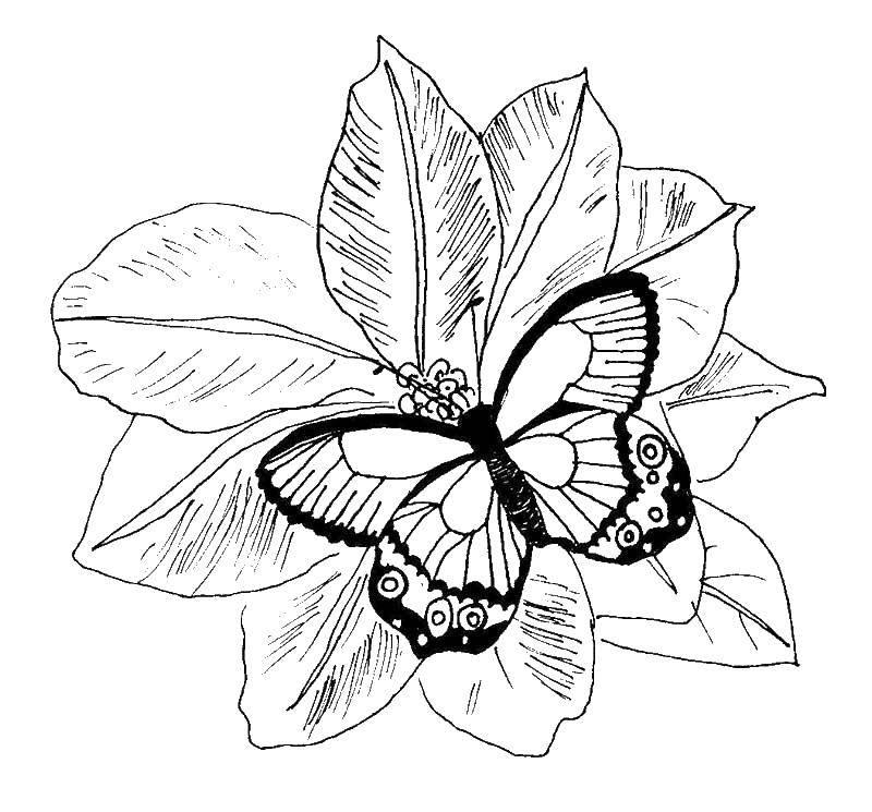 Раскраска цветы Скачать Цветы, букет, ваза.  Распечатать ,цветы,