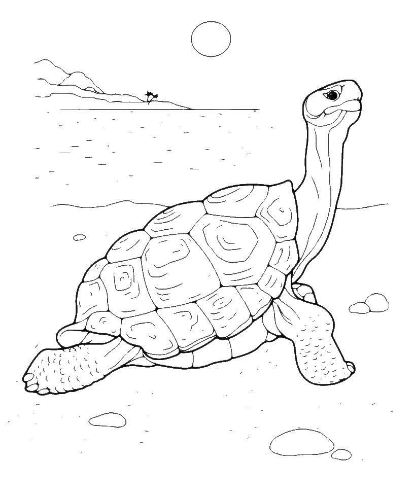 Раскраска Пляж Скачать Свинья, поросенок.  Распечатать ,домашние животные,