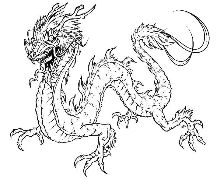 Раскраска Китайский длинный дракон Скачать дракон, огонь.  Распечатать ,Драконы,