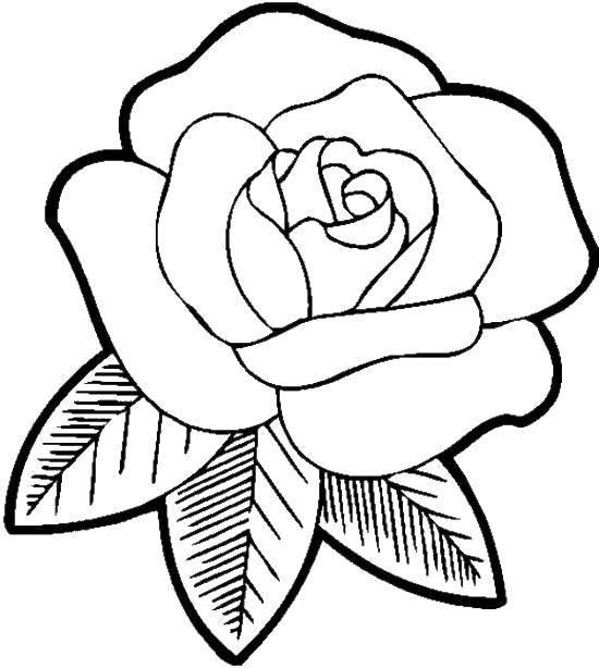 Раскраска Лепестки и роза Скачать Цветы, розы.  Распечатать ,Цветы,