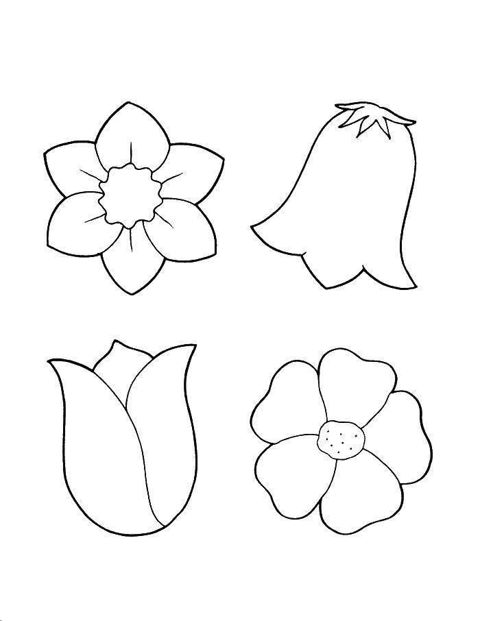 Название: Раскраска Разные бутоны. Категория: Цветы. Теги: цветы, бутоны.