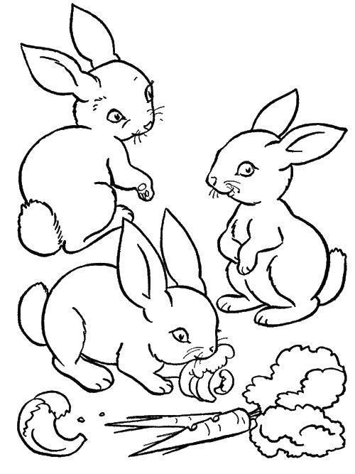 Раскраска Кролики едят морковку Скачать животные, кролики, зайчики, морковь.  Распечатать ,Животные,