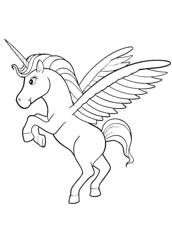 Раскраска Аликорн волшебная лошадь Скачать волшебные, создания, аликорн.  Распечатать ,Волшебные создания,
