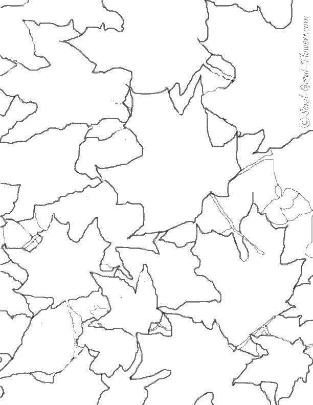 Раскраска Листва. Скачать листья, листва.  Распечатать ,Контуры листьев,