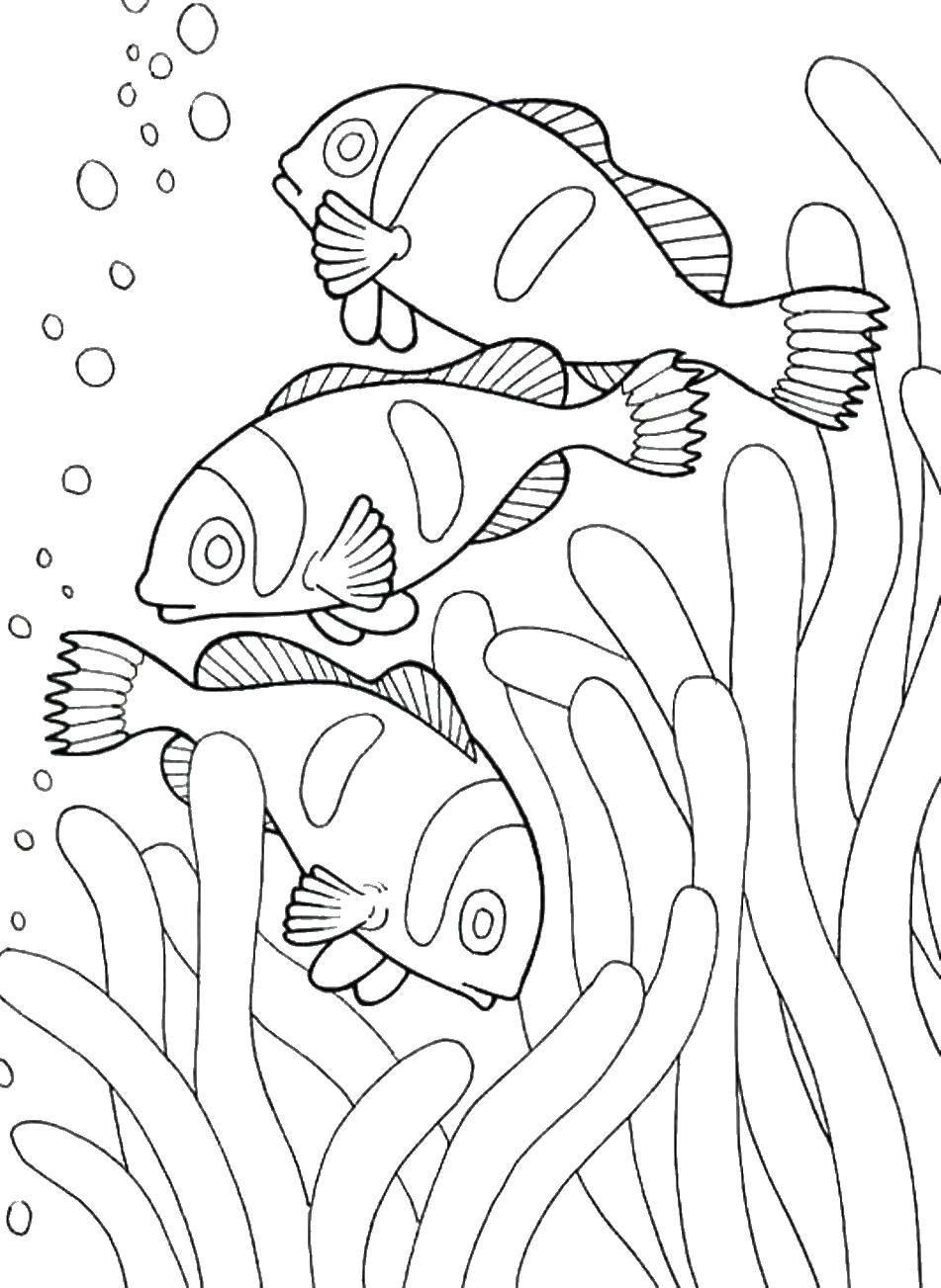 Раскраска Рыбки у водорослей. Скачать рыбы, рыбки, водоросли, море.  Распечатать ,морское,