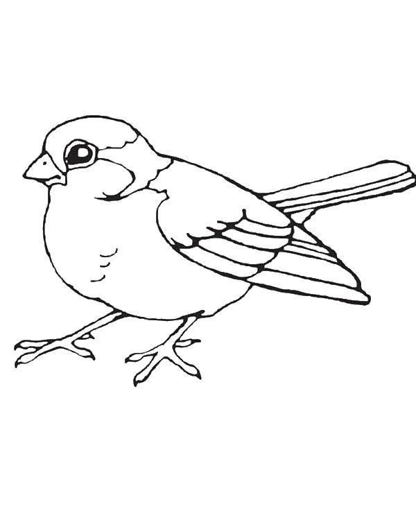 Раскраска птицы Скачать ,птицы,.  Распечатать