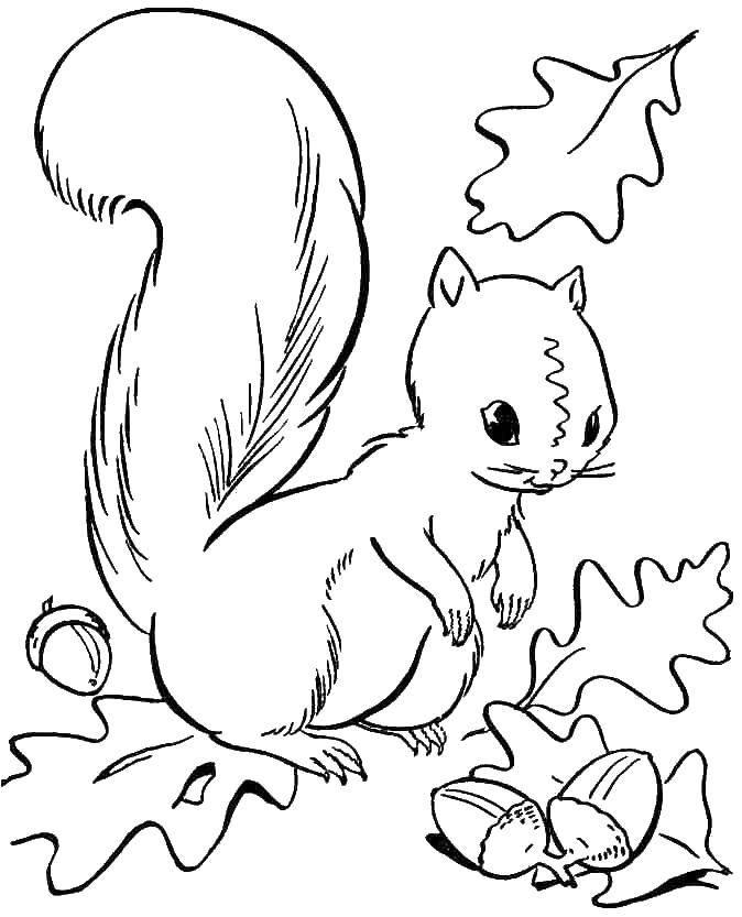 Раскраска грызуны Скачать Ягоды, вишня.  Распечатать ,ягоды,