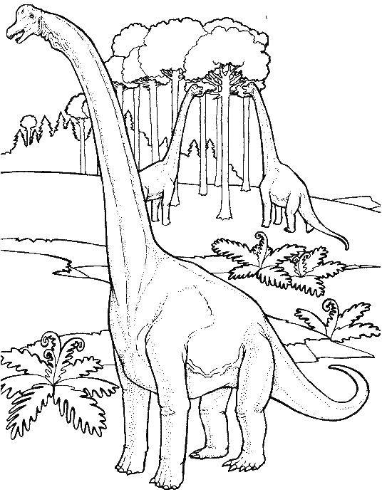 Раскраска Брахиозавры кушаю листья Скачать Брахиозавр, динозавр, .  Распечатать ,парк юрского периода,