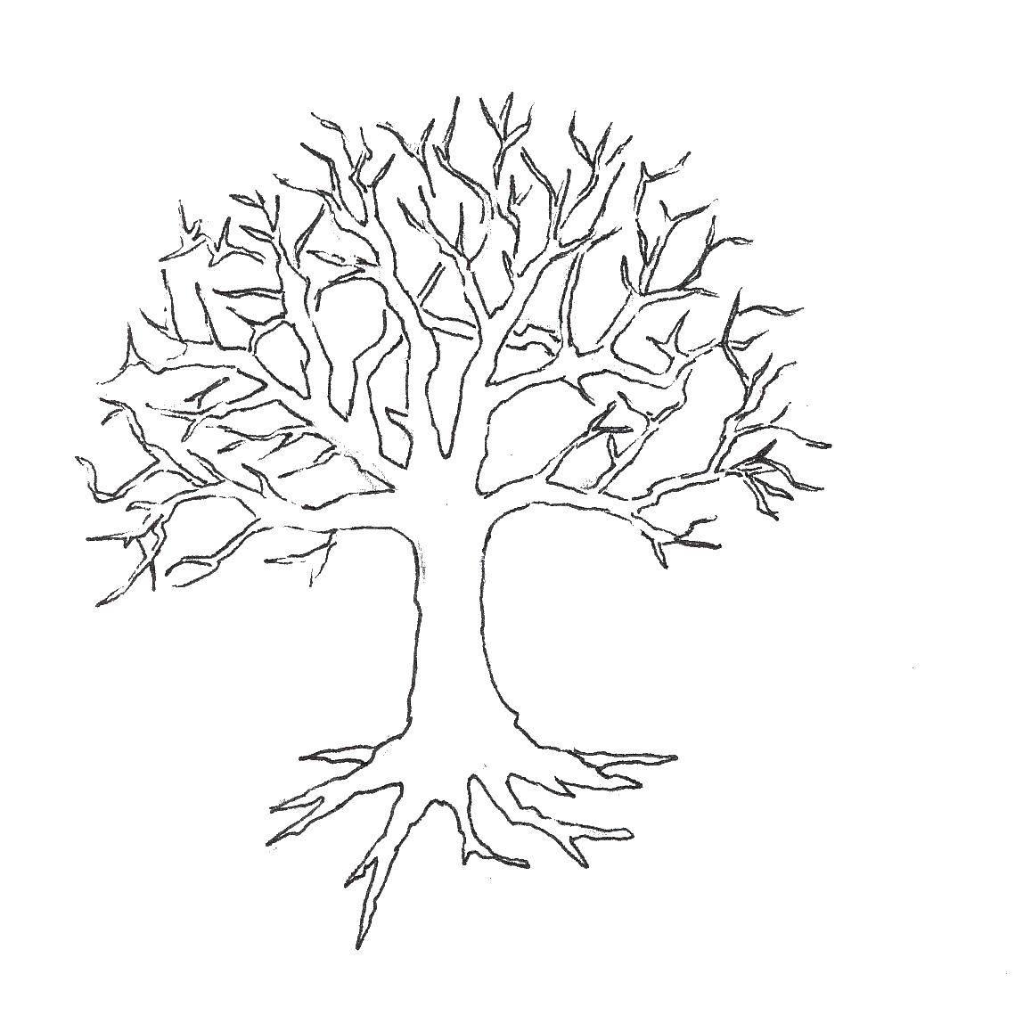 Раскраска Дерево и корни Скачать дерево, контуры.  Распечатать ,Контур дерева,