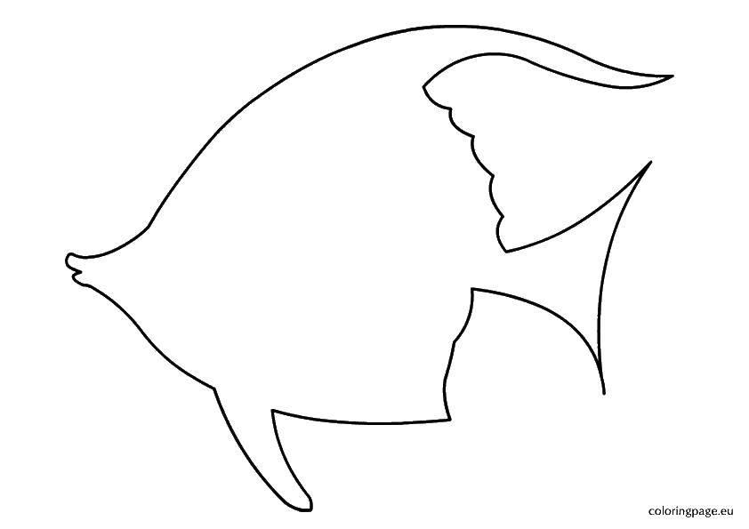 Раскраска Контур рыбы Скачать контуры рыб, шаблоны, рыбки.  Распечатать ,Контуры рыб,