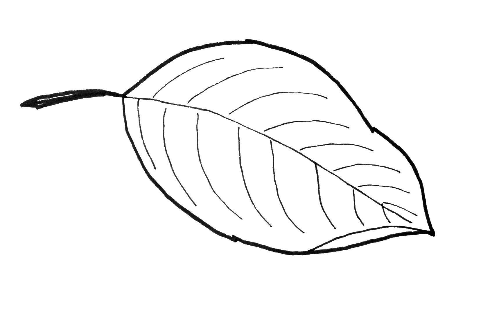 Раскраска Контуры листьев деревьев Скачать сердце.  Распечатать ,Я тебя люблю,