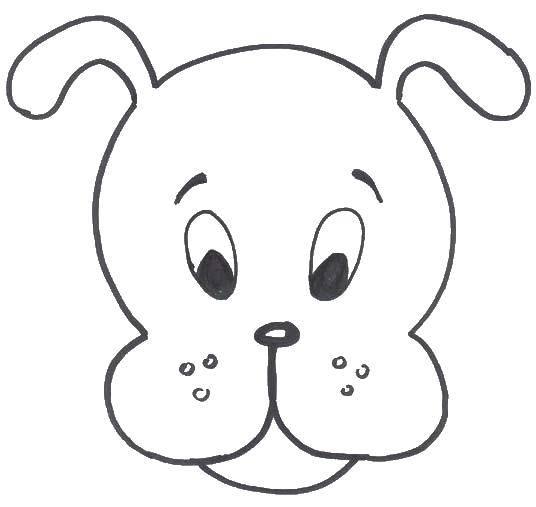 Раскраска контуры собаки Скачать .  Распечатать