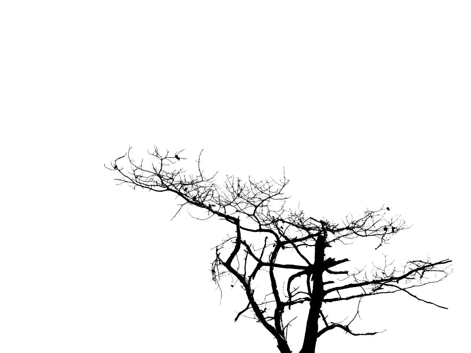 Раскраска Контур дерева Скачать животные, змея, ужик, уж.  Распечатать ,Животные,