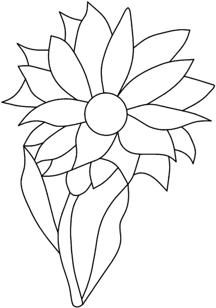 Название: Раскраска Цветочек с множеством лепестков. Категория: цветы. Теги: цветы, лепестки.