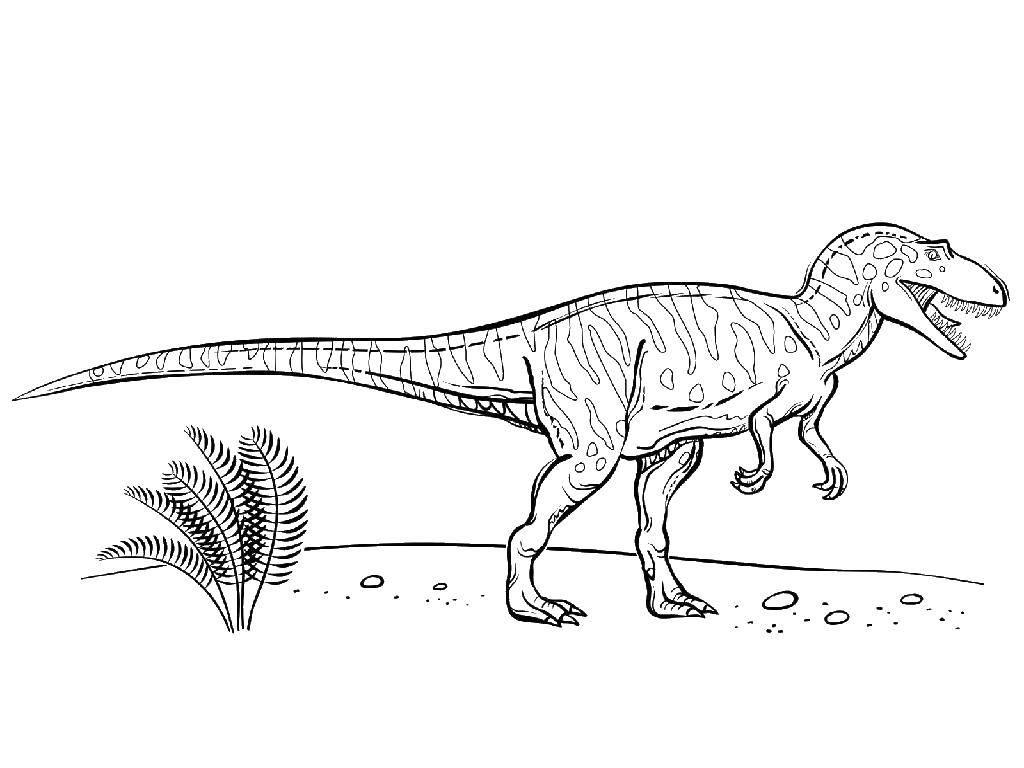 Раскраска Динозавр с длинным хвостом. Скачать динозавр, природа.  Распечатать ,динозавр,