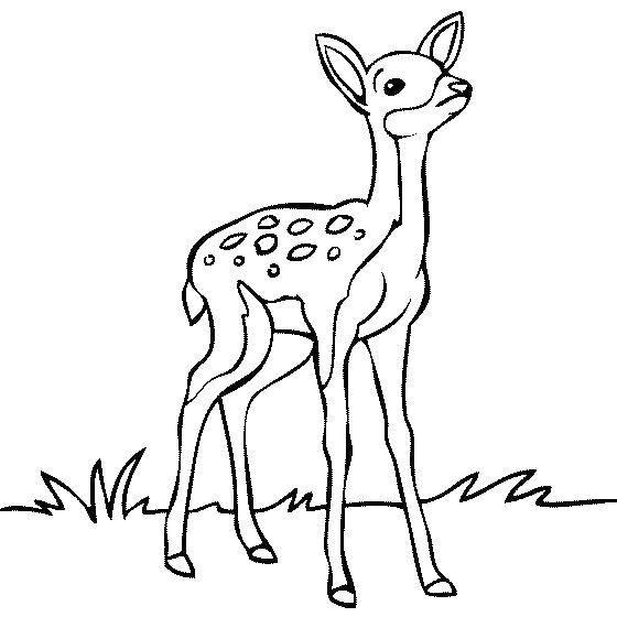 Раскраска Длинноногий олень Скачать Животные, олень.  Распечатать ,дикие животные,