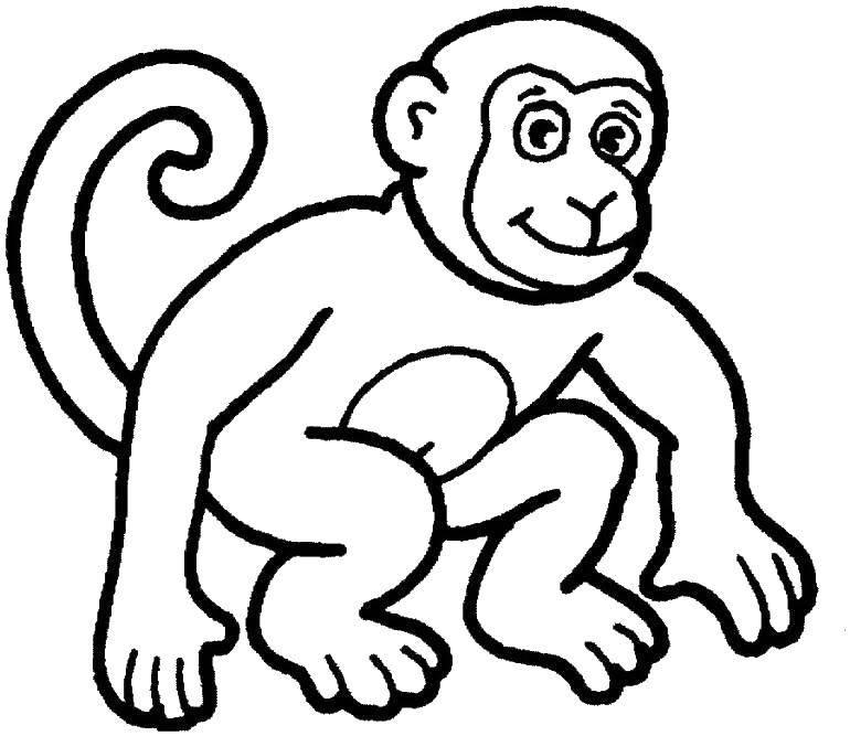Раскраска Длинный хвост обезьянки Скачать Животные, обезьянка.  Распечатать ,Животные,