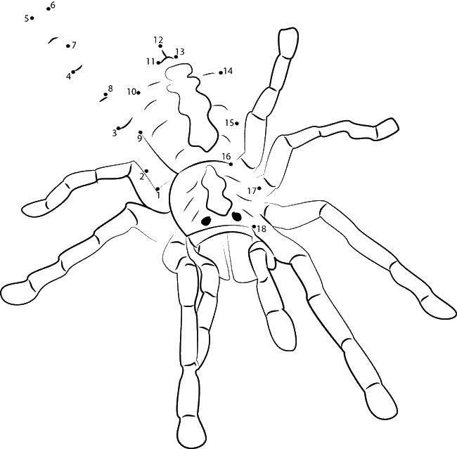 Раскраска пауки Скачать ,поезда, горы, транспорт,.  Распечатать