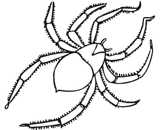 Раскраска пауки Скачать .  Распечатать