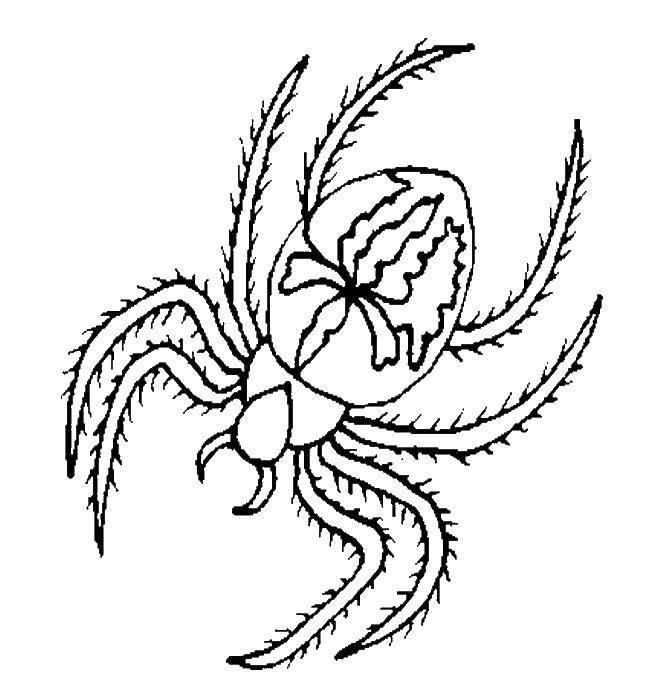 Раскраска пауки Скачать ,насекомые, пауки,.  Распечатать