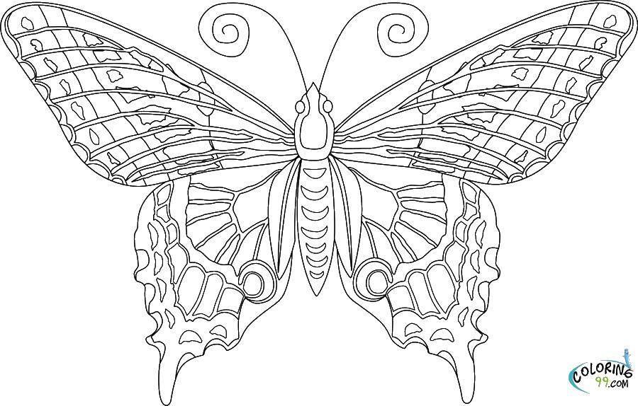 Название: Раскраска Красивая бабочка.. Категория: бабочки. Теги: бабочки, крылья, усики.