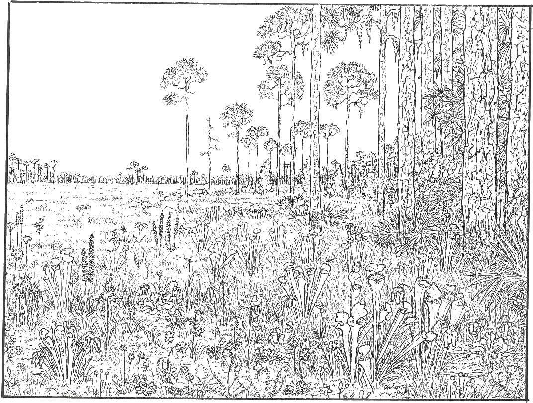 Раскраска лес Скачать ,узоры, цветы,.  Распечатать