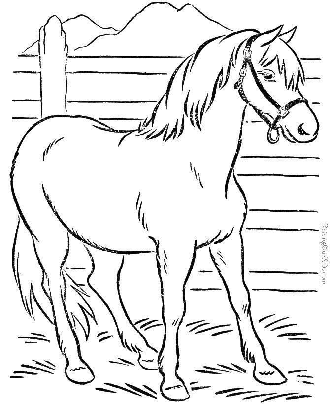 Раскраска Лошадь стоит в стойле Скачать Животные, лошадь.  Распечатать ,Животные,