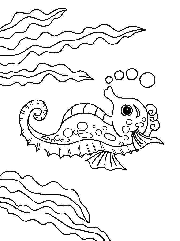Раскраска Морской конёк среди водорослей пускает пузырьки. Скачать Подводный мир, морские коньки.  Распечатать ,Морские животные,