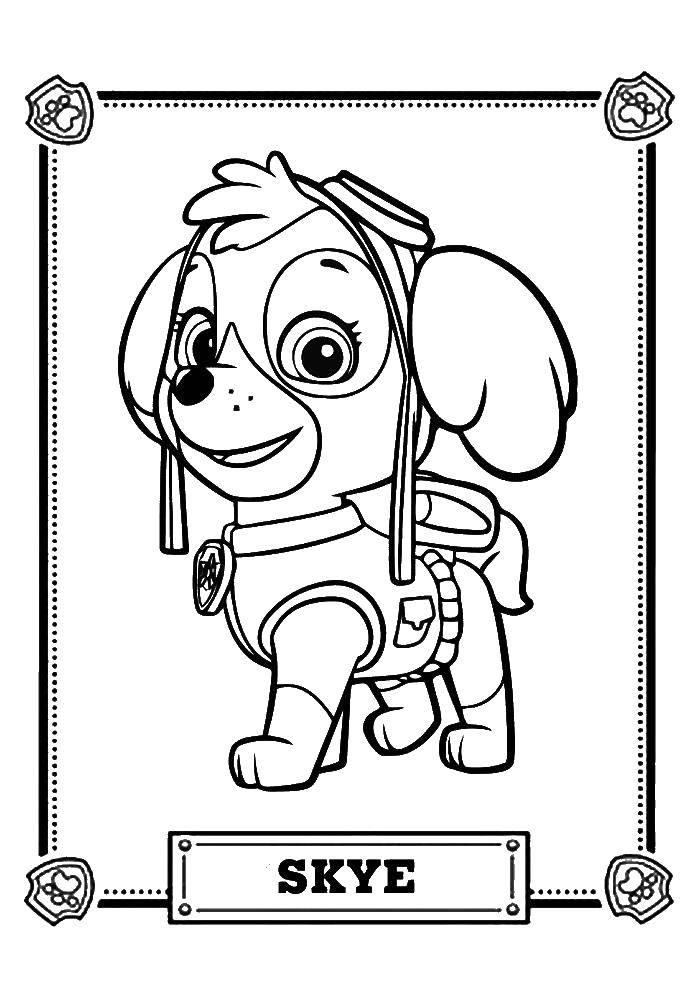 Раскраска Щенячий патруль Скачать щенячий патруль, мультфильмы, скай.  Распечатать ,щенячий патруль,