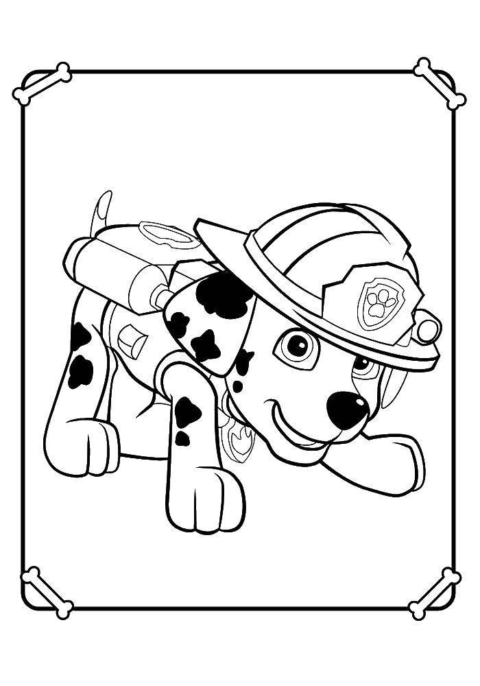 Раскраска Щенячий патруль. Скачать щенячий патруль, мультфильмы.  Распечатать ,щенячий патруль,
