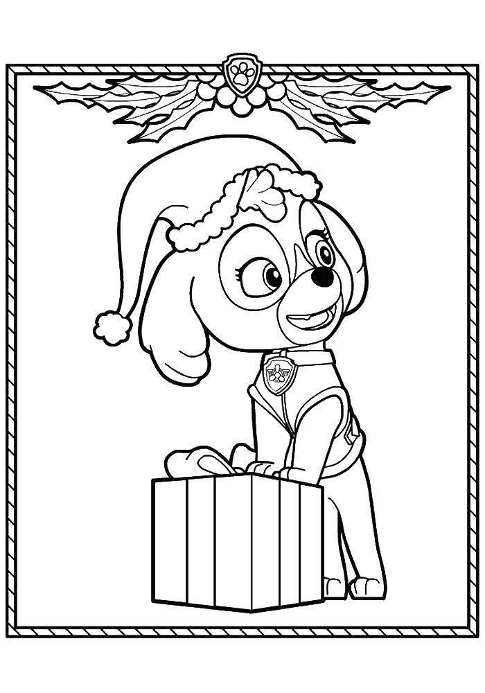 Раскраска Скай с подарком Скачать щенячий патруль, мультфильмы, подарки.  Распечатать ,щенячий патруль,