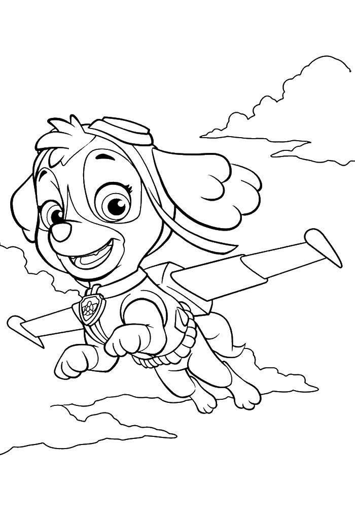 Раскраска Скай в небе Скачать щенячий патруль, мультфильмы, скай.  Распечатать ,щенячий патруль,