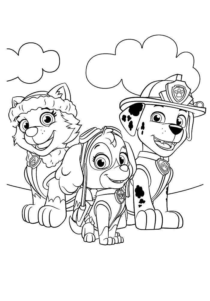 Раскраска Три собачки Скачать собаки, щенячий патруль, мультфильмы.  Распечатать ,щенячий патруль,