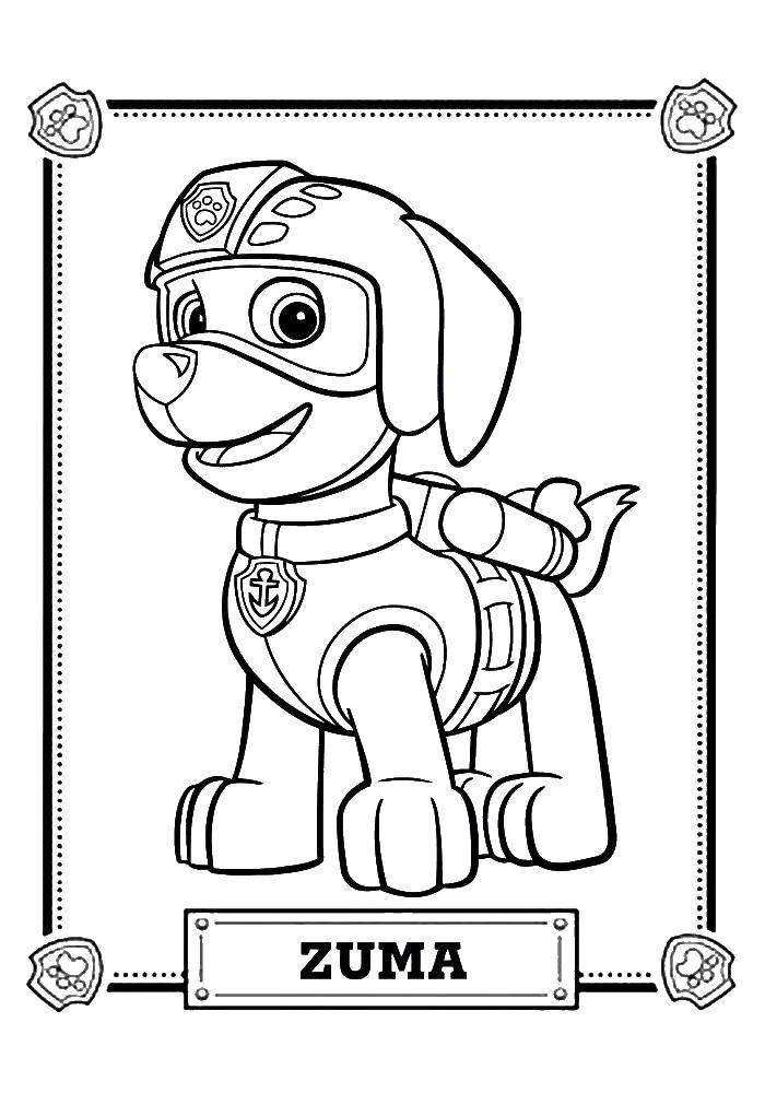 Раскраска Зума Скачать щенячий патруль, мультфильмы, зума.  Распечатать ,щенячий патруль,