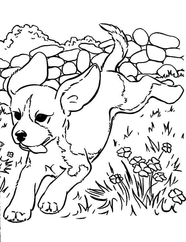 Раскраска Играющийся щеночек. Скачать животные, собака, щенок, пес.  Распечатать ,домашние животные,